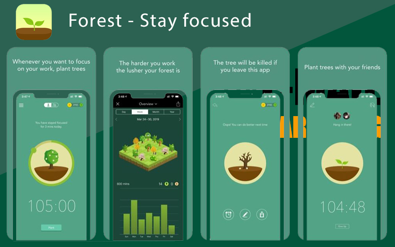 Forest – Stay focused